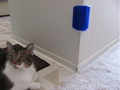 Obrázok z Masážna kefa pre mačky