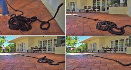 Obrázok z Zmršťovacia záhradná hadica Profi 22,5 m