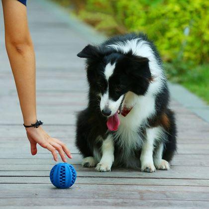 Obrázok z Žuvacie loptička pre psov - veľká