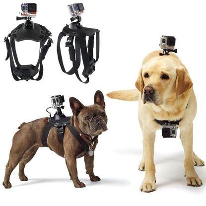 Obrázok  Psie postroj na kameru