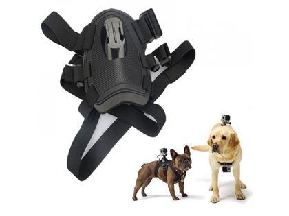 Obrázok z  Psie postroj na kameru