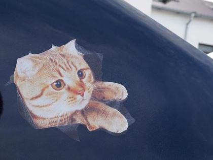 Obrázok z Nálepka - mačka