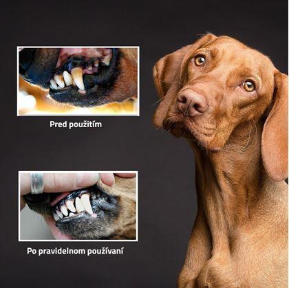 dentálnej hračky pre psov