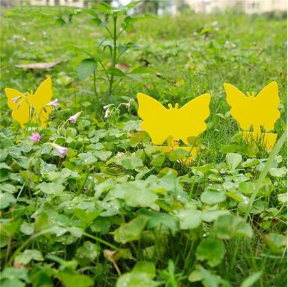 Ochrana rostlin proti hmyzu